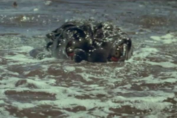 Hedorah swimming